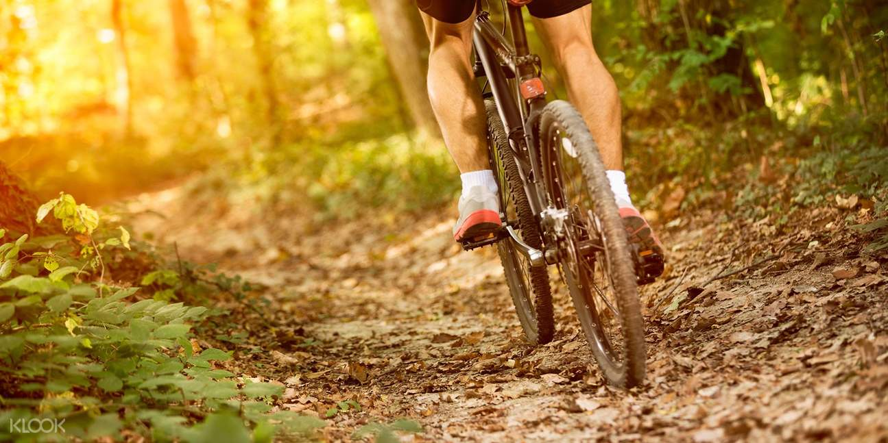 person cycling in jungle trails